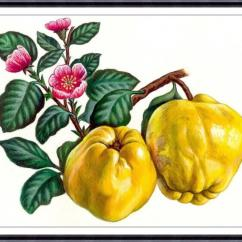 Fruit Decor For Kitchen Boos Island Print Painting Botanical Art Apple Wall