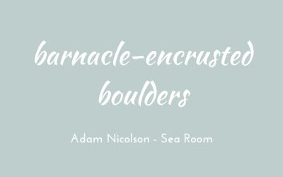 Barnacle-encrusted boulders