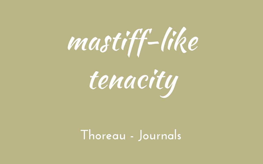 Thoreau - Journal - mastiff-like tenacity