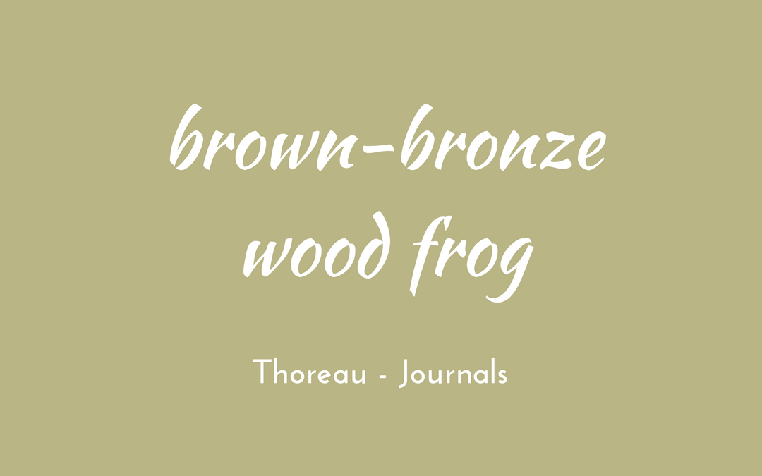 Thoreau - Journal - brown-bronze wood frog
