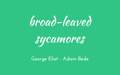 Broad-leaved sycamores and weary-hearted women