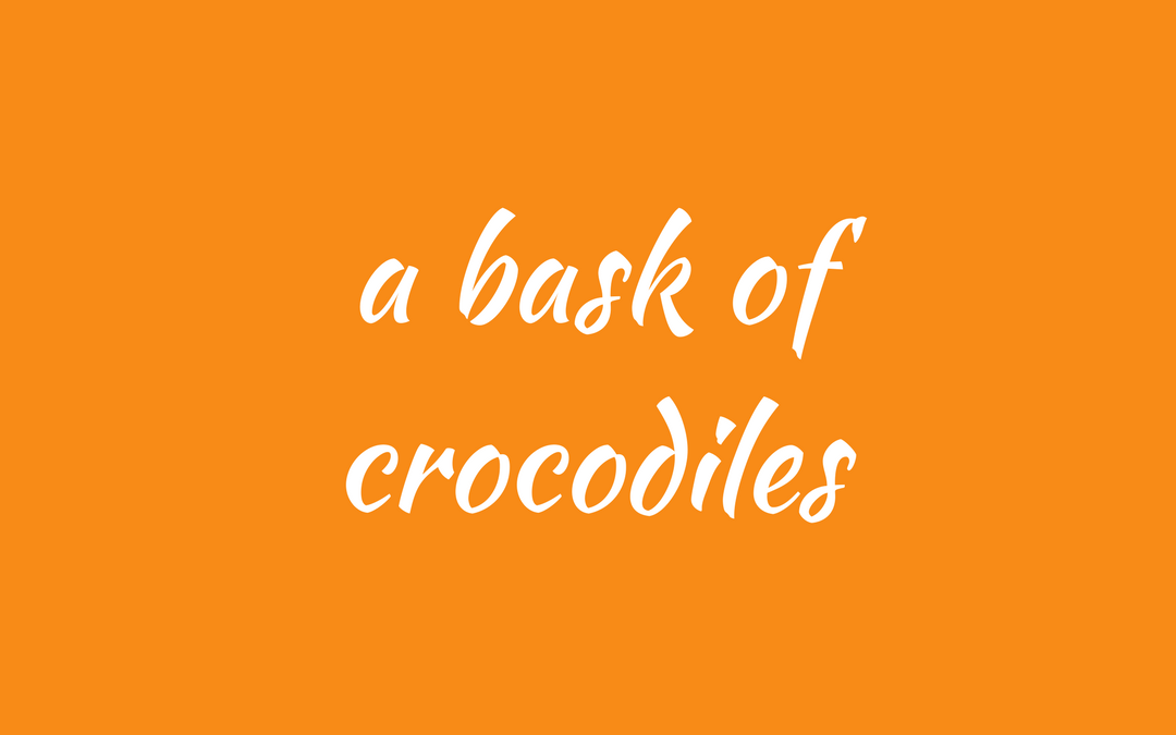 collective noun - crocodiles