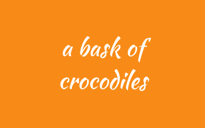A bask of crocodiles