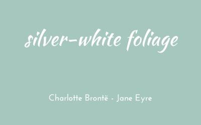 Silver-white foliage