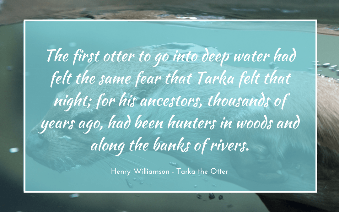 otters water fear hunting swimming Henry Williamson - Tarka the Otter - quotation