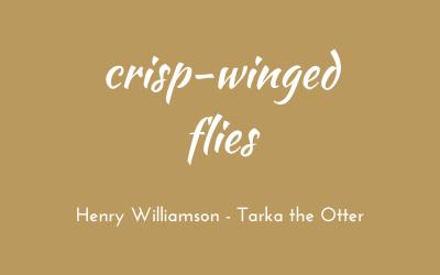 Crisp-winged flies