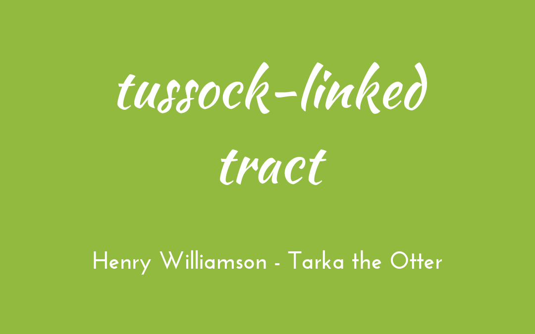 Tussock-lined tract