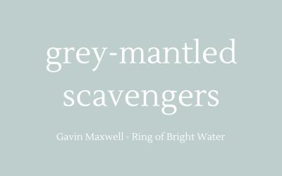 Grey-mantled scavengers