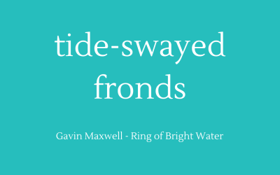 Tide-swayed fronds