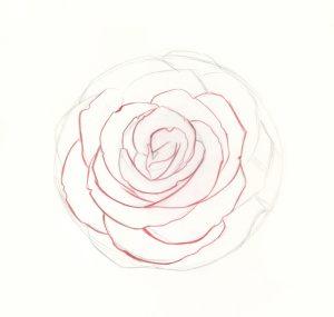 rose step drawing easy sketch drawings draw roses pencil flower realistic sketches beginner tutorial paint flowers beginners artistsnetwork graphite simple