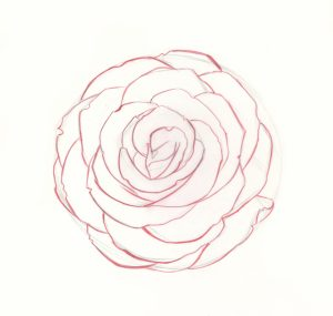 draw roses step rose drawing easy simple flower drawings realistic artistsnetwork complete pencil sketches tutorial acrylic bloom variations painting guide