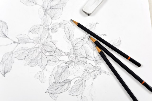 Learning to Draw with Graphite Pencil | Here's What You Need to Know
