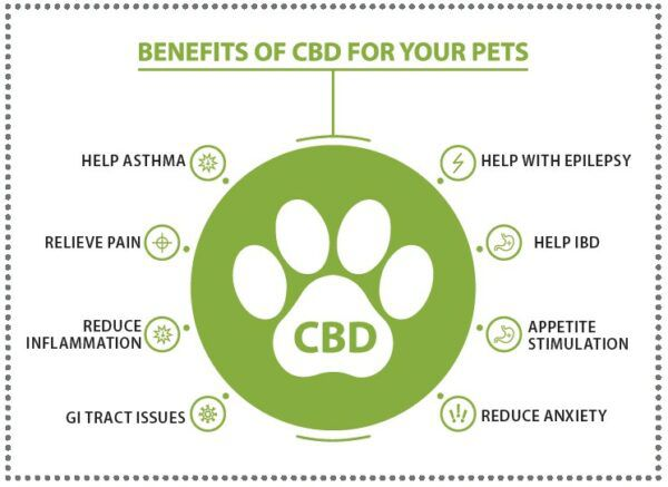 benefits of cbd for your pets