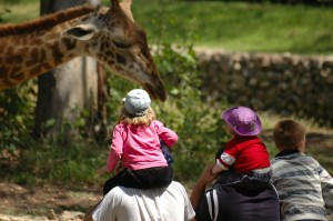 memberships to zoo