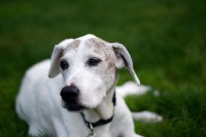 olderdog