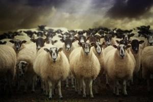 Audran Gosling / Shutterstock.com