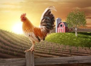 James Steidl / Shutterstock.com