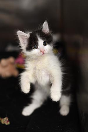 kitten nursery at visitor