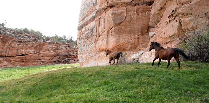 Image result for pet sanctuaries