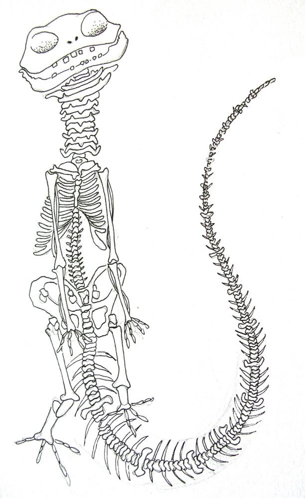 Illustration by Chandni Sahi at Coroflot.com