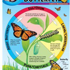Panda Life Cycle Diagram Futaba Servo Wiring Diagrams Butterfly Chart