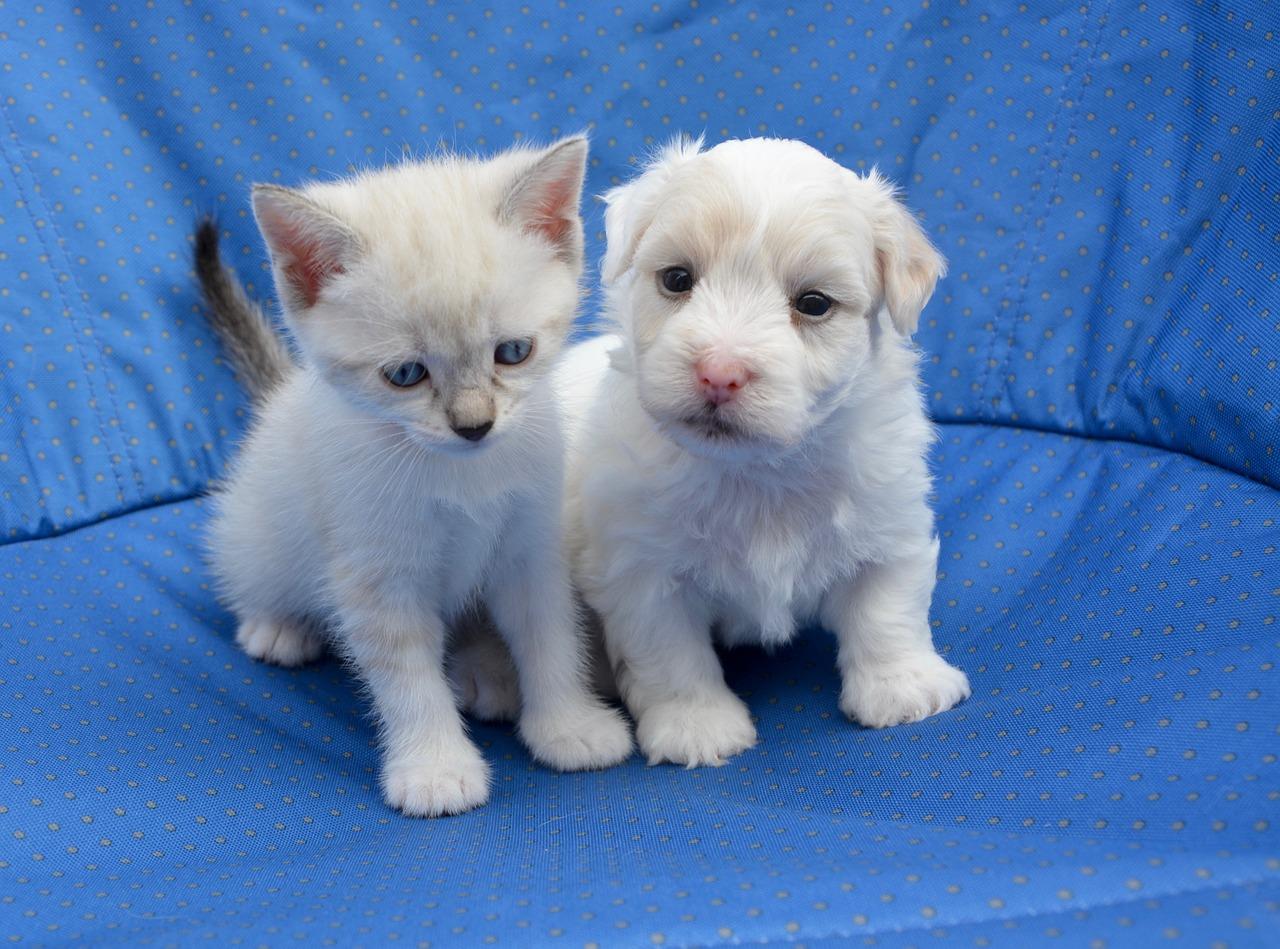 britain bans puppy kitten