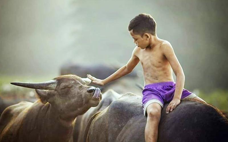 Mowgli Malaysia akrab dengan haiwan kerana sayang  Free