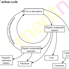 Explain Water Cycle With Diagram Guitar Pickup Wiring The Carbon Help Of A Science - 3762494 | Meritnation.com