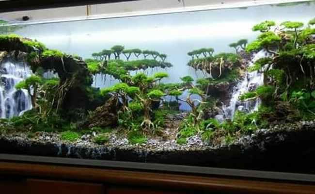 Cara Membuat Air Terjun Aquascape Dunia Akuarium Cute766