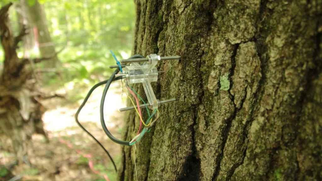 El dendrómetro rastrea la forma en que el tronco y las ramas se hinchan o contraen.