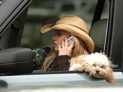 Pictures like this one - of celebrity Jessica Simpson with her adorable doggie on her lap - while cruising in her cool car - are what is making this practice so popular today...