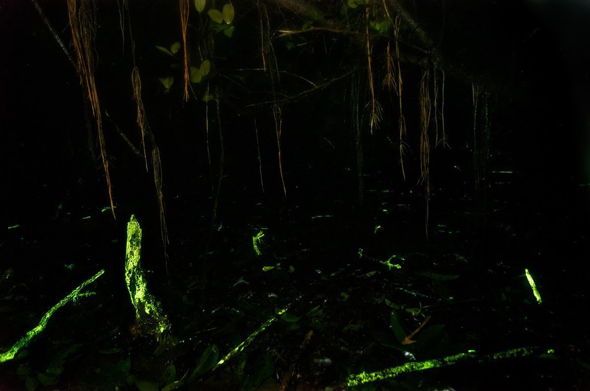 Forget Avatar This Forest In India Actually Glows In The