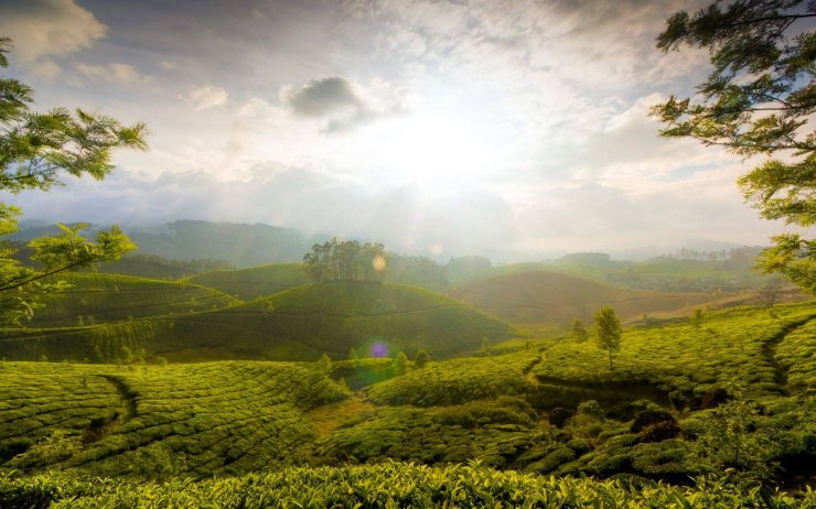 17 Breathtakingly Beautiful Places In India You Must Visit Before You Die tea garden hill of munnar