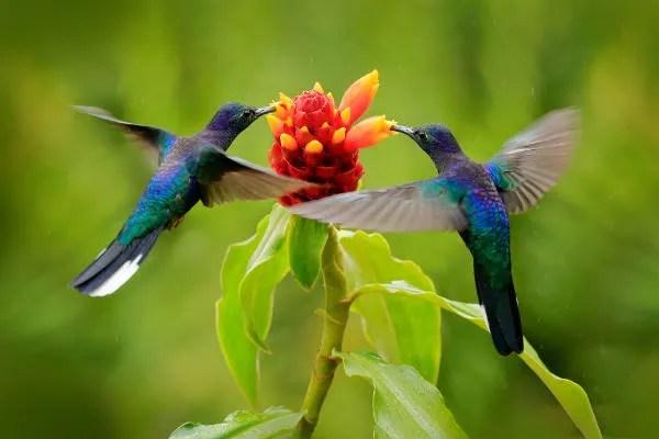 A atividade de animais polinizadores, como os beija-flores, intensifica-se na primavera.