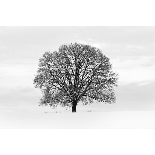 Silhouette Black and Grey Tree Wall Mural Homeware