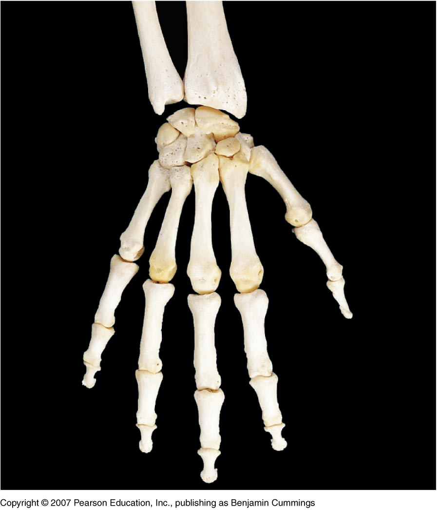 wrist and hand unlabeled diagram 2000 hyundai elantra belt bones