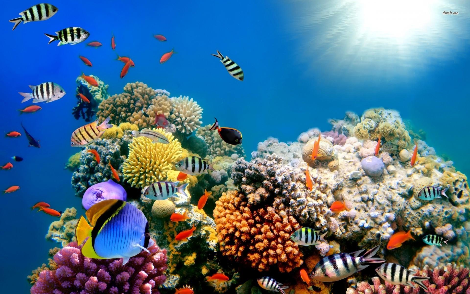 Striped Sheepshead fish , Coral Reef , Goldfish, Powder B...