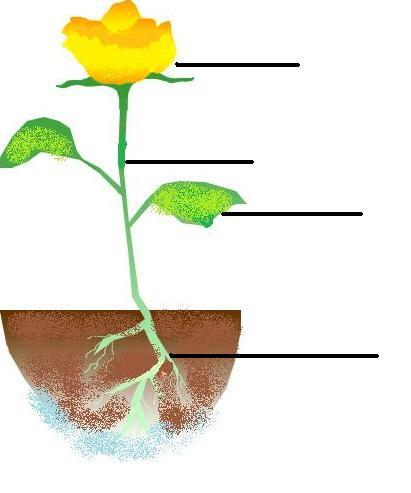 Unlabeled Flower Structure | Best Flower Site
