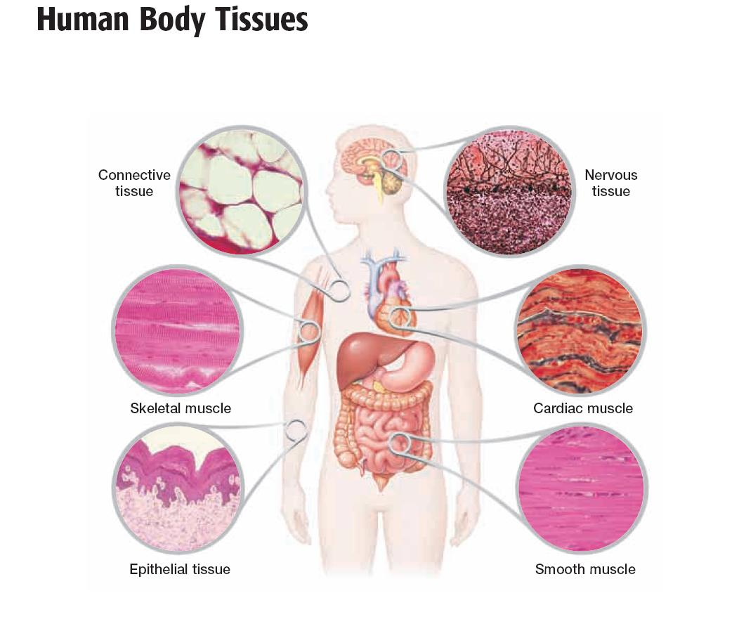 hight resolution of  learned about many disease that we can get from our connective tissue which is kind of scary since we have connective tissue all over our body organs