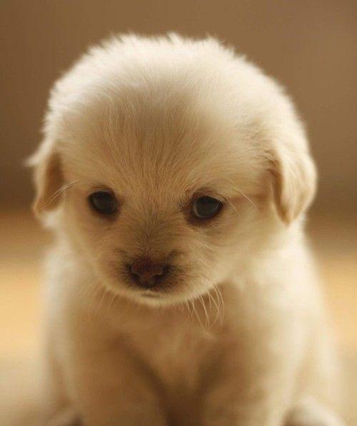 Cute Love Boy Girl Wallpaper Cute Dog Love Lovely Image 531569 On Favim Com