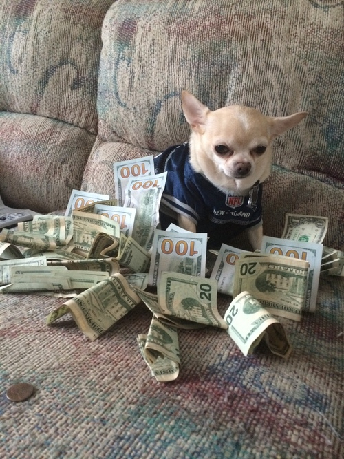 Art Bills Chihuahua Couch Money Rich Theme Tumblr Image