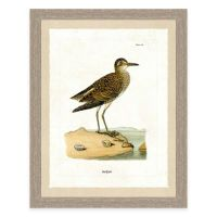 Buy The Framed Gicle Sandpiper Print Wall Art from Bed ...