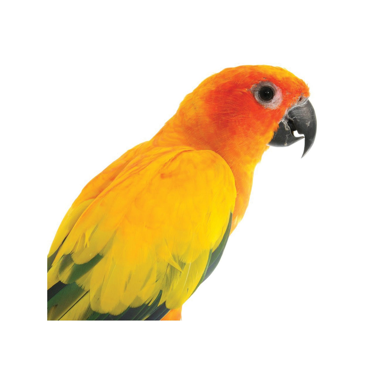 Pet Bird Chicken Supplies Bird Store Petco
