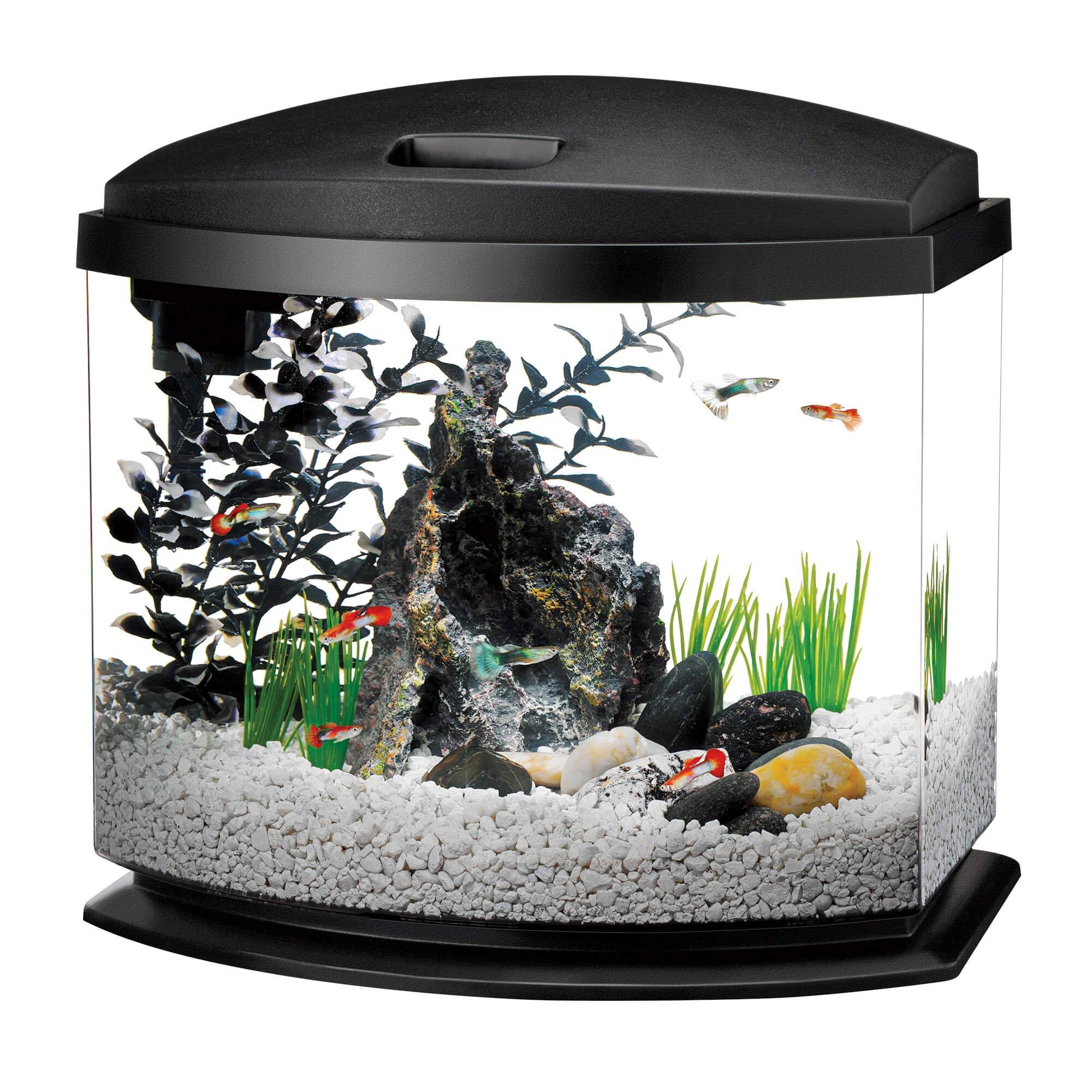 large fish tanks for
