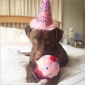 Birthday Boy Puppy Amp Dog Subscription Boxes Pupbox At Petco