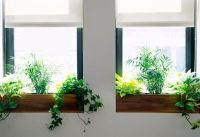 The Sill + Terrain: Planting a Window Box | The BLOG at ...