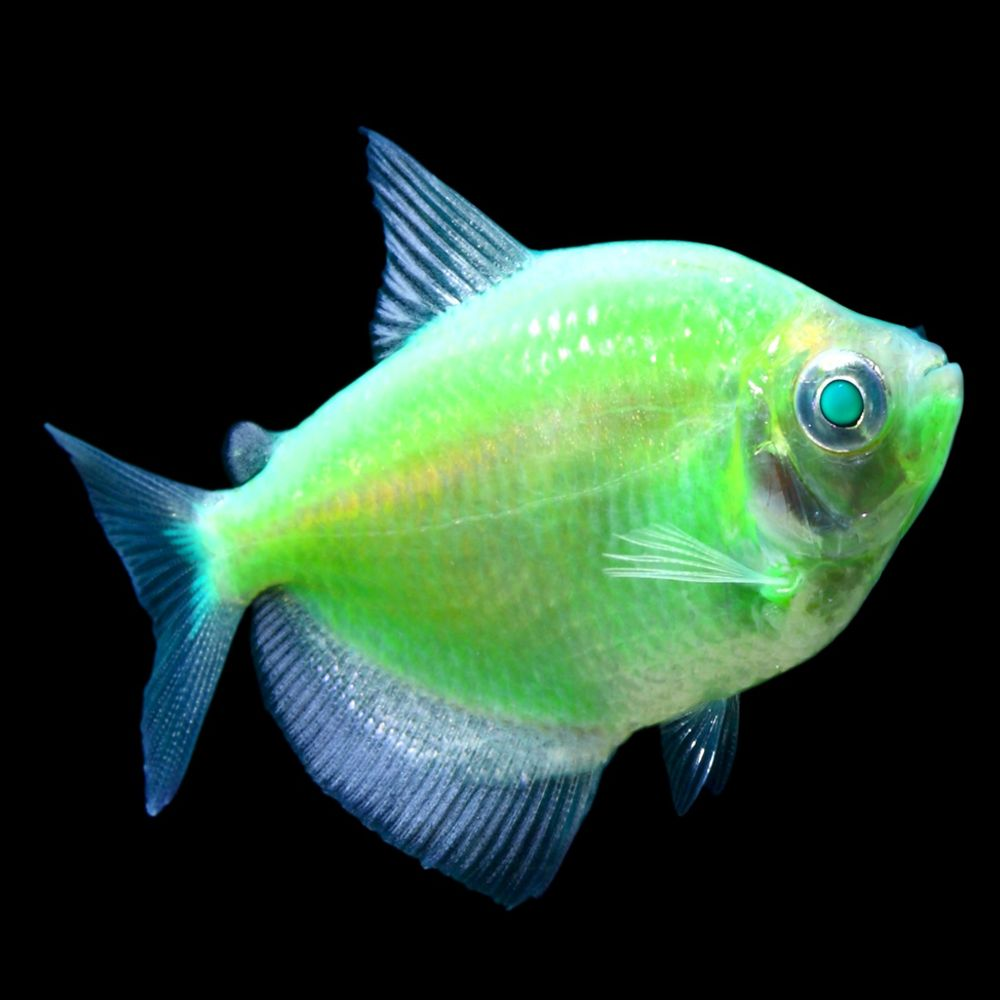 pet fish for sale