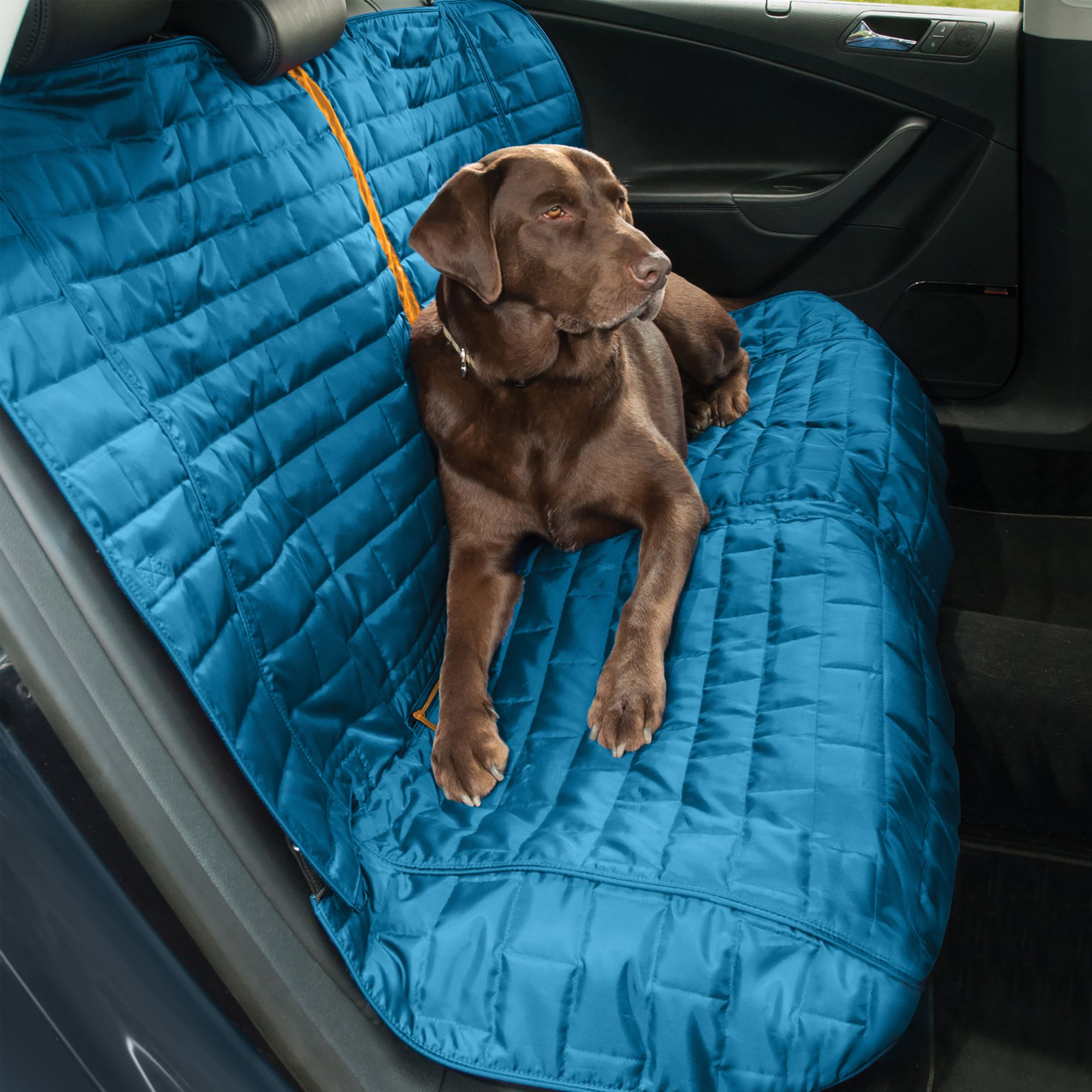 sofa covers petsmart sleeper futons dog supplies and puppy products