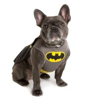 DC Comics Batman Pet Costume | dog Costumes | PetSmart