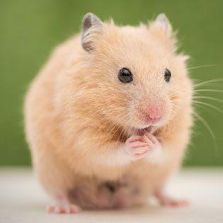 hamster supplies habitat accessories